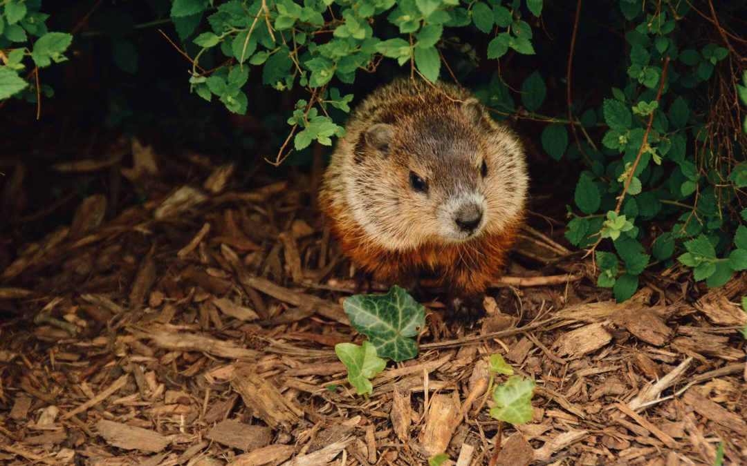 What Groundhog Day (the Movie) Says About Life